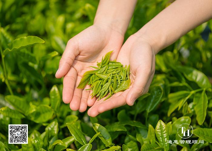 茶叶推广有障碍 申请商标来助力
